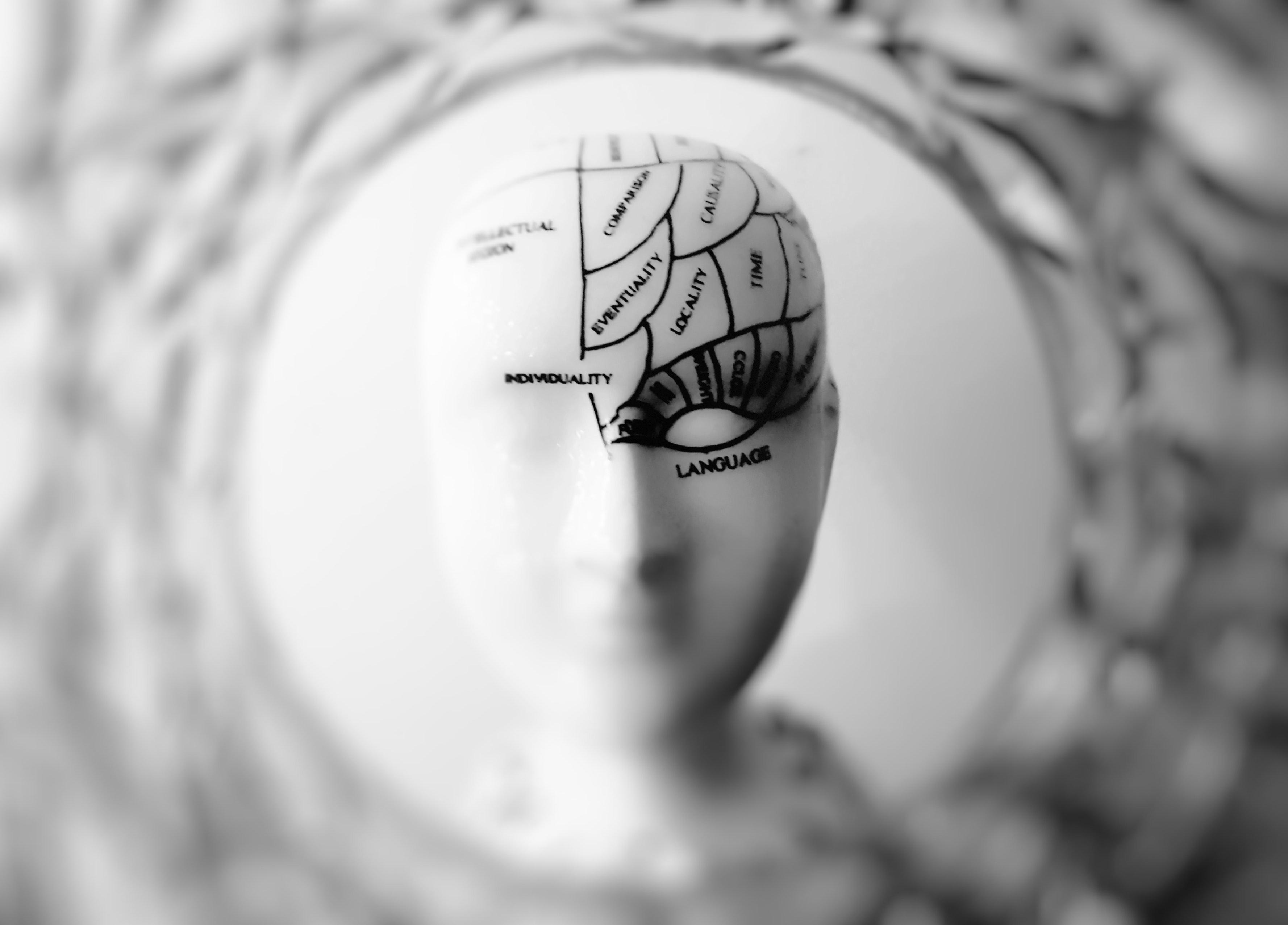 cognitive brain development